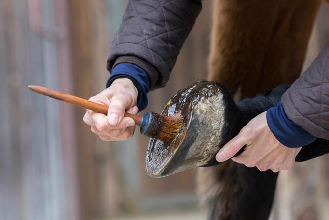 Pferdehuf wird eingefettet