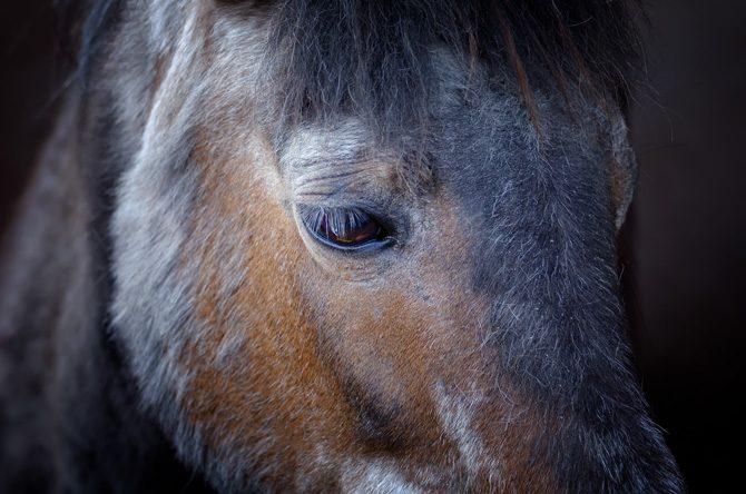 Pferd mit teilweise ausgefallenem Winterfell