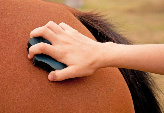 Pferd wird mit Gummistriegel geputzt