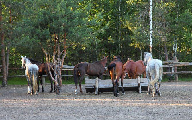 Pferde im Offenstall