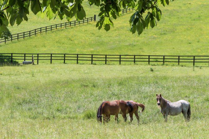 Pferde auf großer Weide-