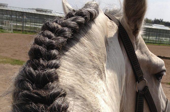 Die Fünf Schönsten Pferdefrisuren Schweif Und Mähne