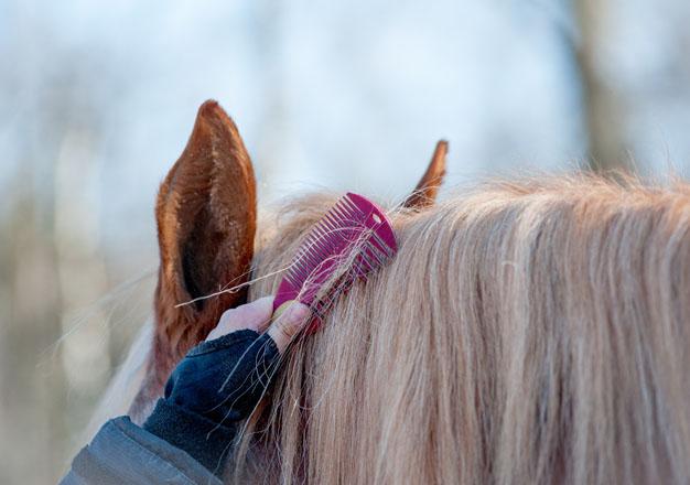 Mähnenpflege beim Pferd