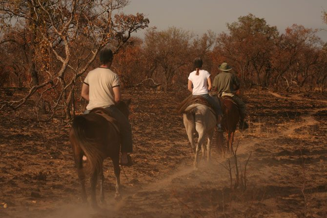 Reiter machen eine Safari auf dem Pferd