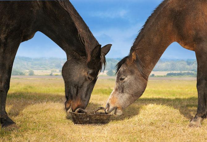 Für jedes Pferd ist Mash geeignet
