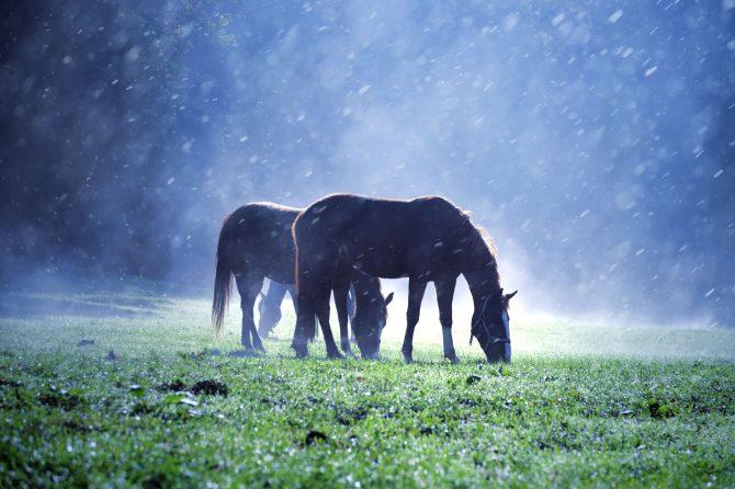 Anweiden bei Regen
