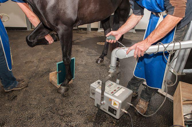 Pferd mit Arthrose beim Röntgen