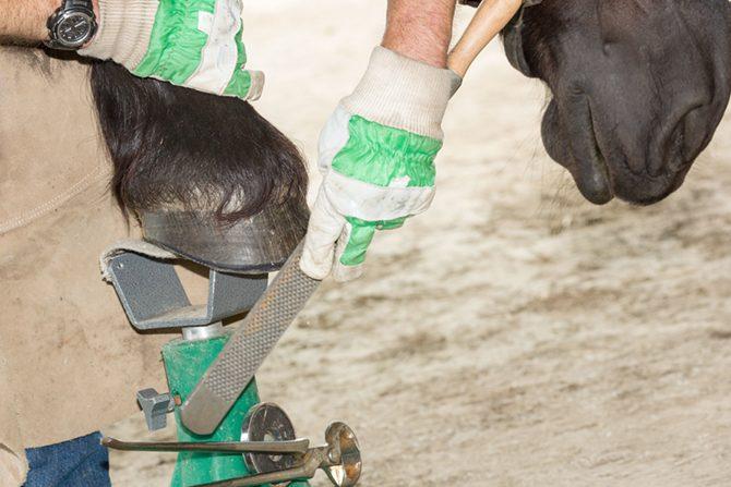 Hufschmied mit speziellen Kenntnissen beschlägt Arthrose Pferd