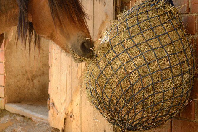 Pferd frisst aus dem Heunetz