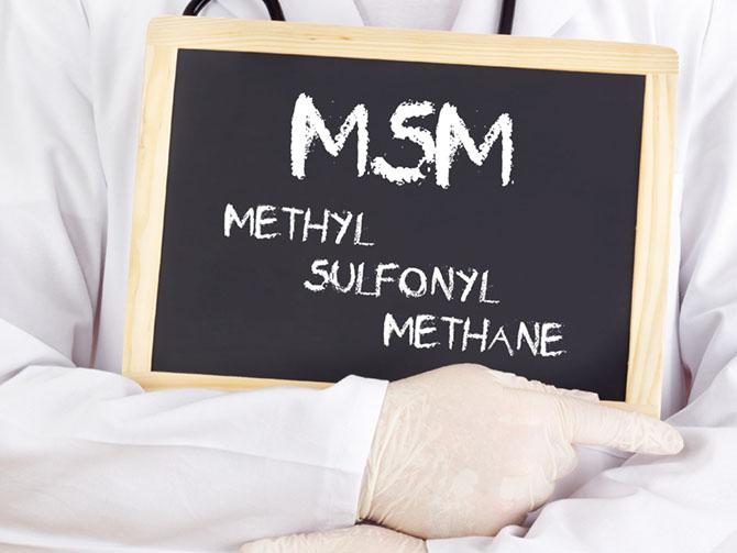 MSM für Pferde