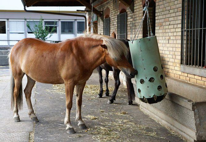 Pferd frisst aus einem Heukorb