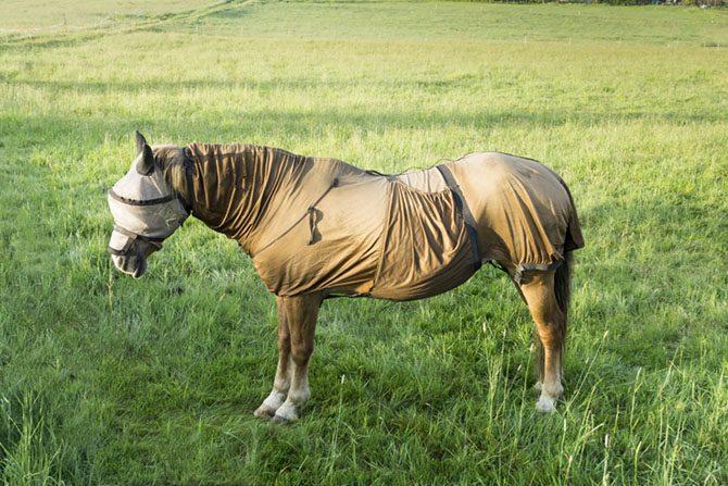 Pferd trägt Ekzemerdecke. Leidet unter Sommerekzem.