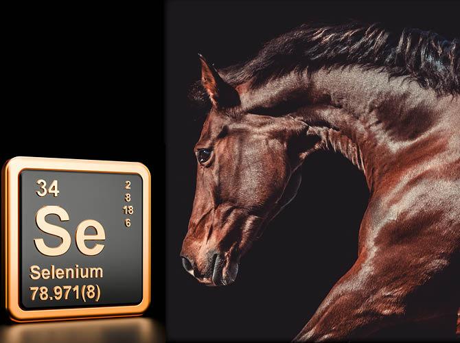 Pferd mit Selen Logo