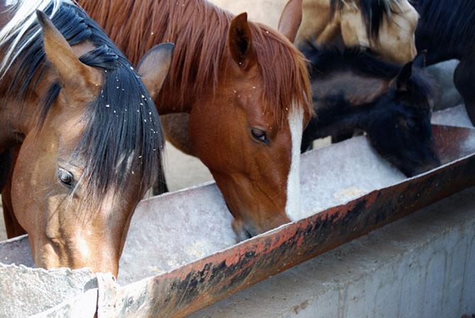 Futtertrog für das Pferd