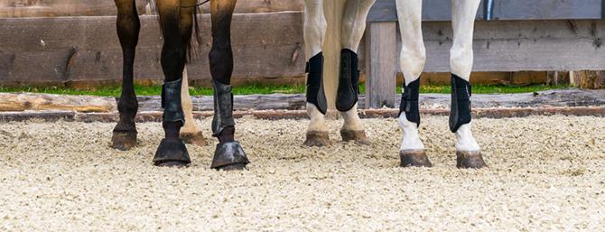 Bei Gelenkschmerzen - Glikosamin für Pferde