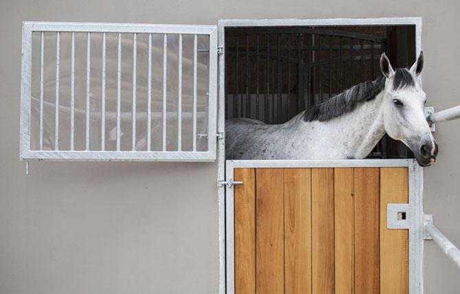 Paddockbox für Pferde