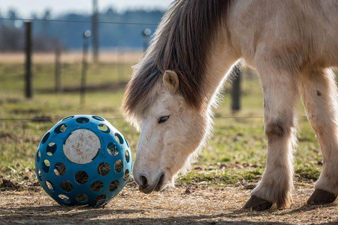 Pferd mit Futterball