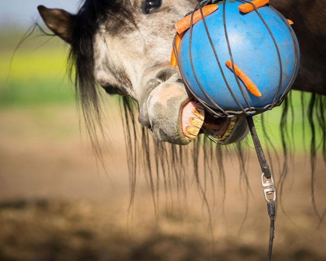 Gegen Langeweile hilf Pferden ein Spielball