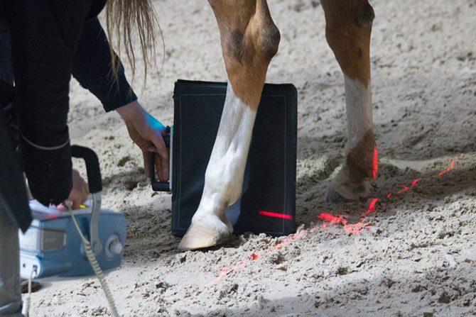Pferdebein wird geröngt.